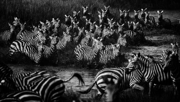 5_Africa's wildlife roaming free