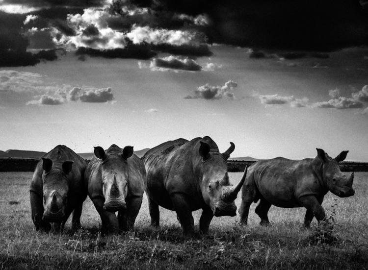 6_Africa's wildlife roaming free