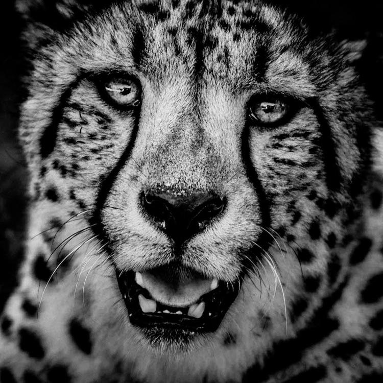 7_Africa's wildlife roaming free