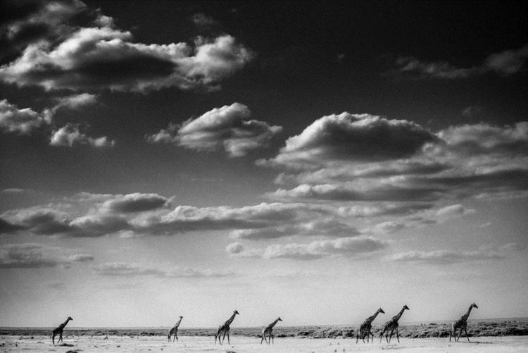 9_Africa's wildlife roaming free