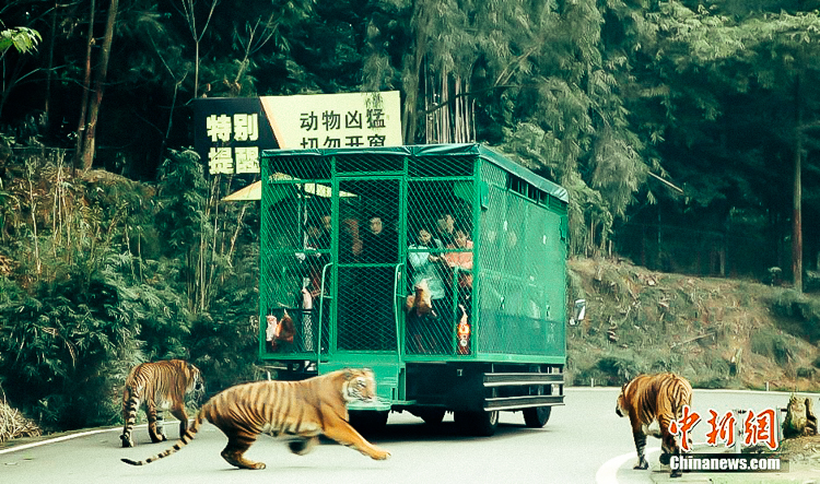 2_Zoo in China where humans are in the cage