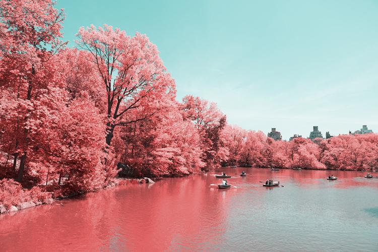 10_Central Park Infrared