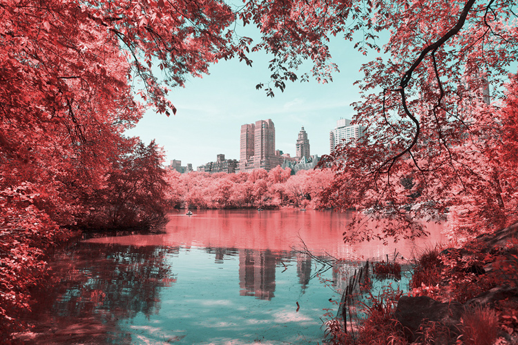 11_Central Park Infrared