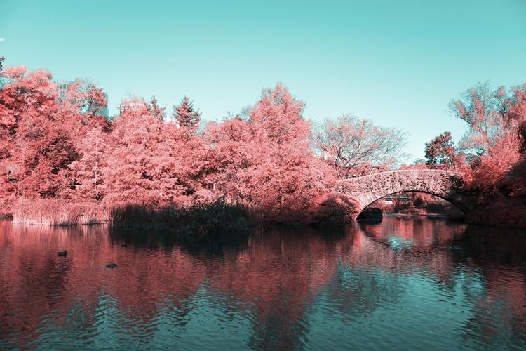 1_Central Park Infrared
