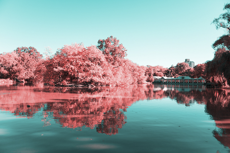 2_Central Park Infrared