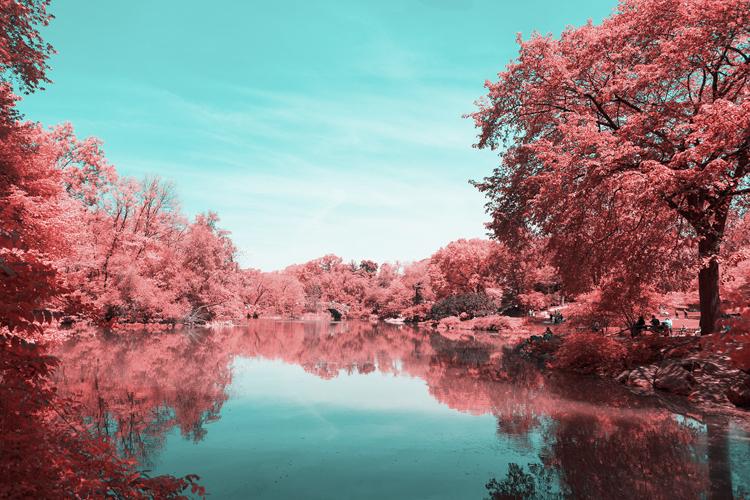 4_Central Park Infrared