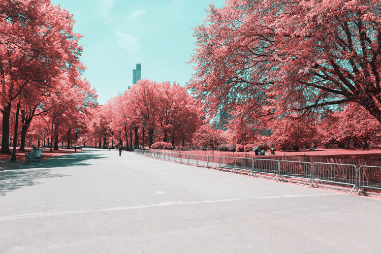 8_Central Park Infrared