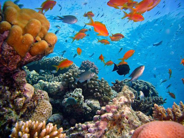 diving-712634_1280