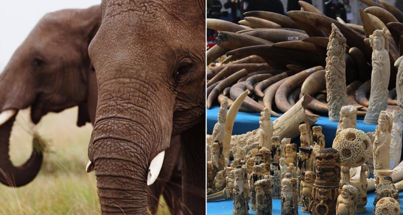 1_hong-kong-will-shut-down-legal-ivory-trade