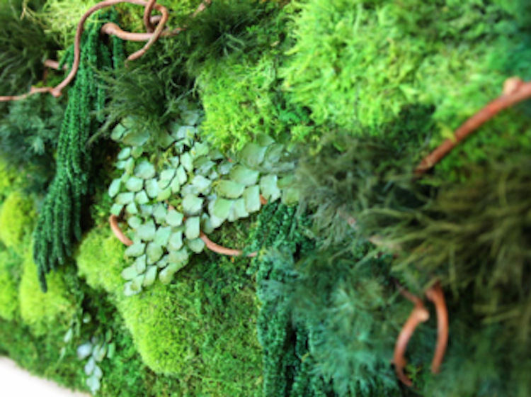 artisan-moss-40x18-natural-vine-plant-art-340x340_c