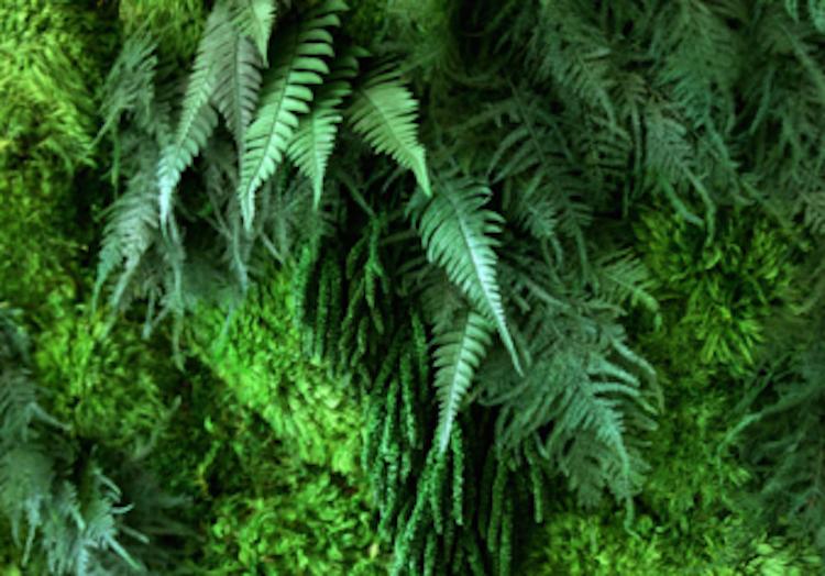 artisan-moss-fern-green-wall-art-detail-340x340_c