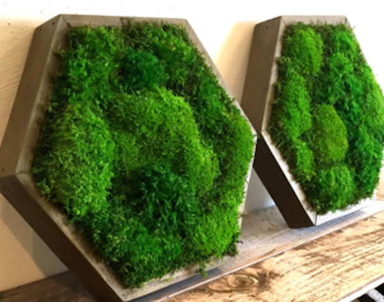 artisan-moss-hexagonal-frame-green-art-340x340_c