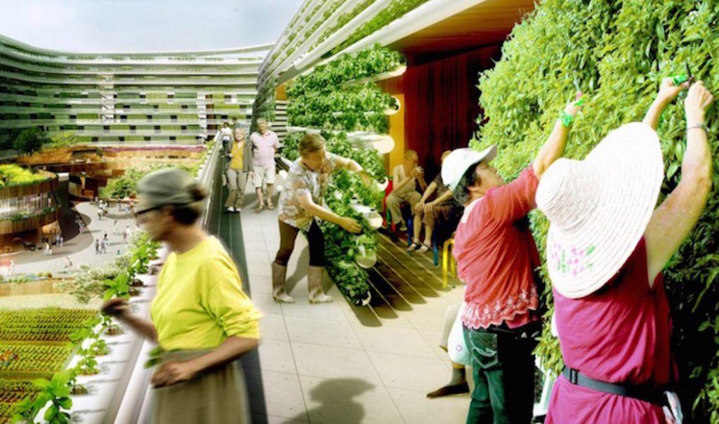 eco garden ideas