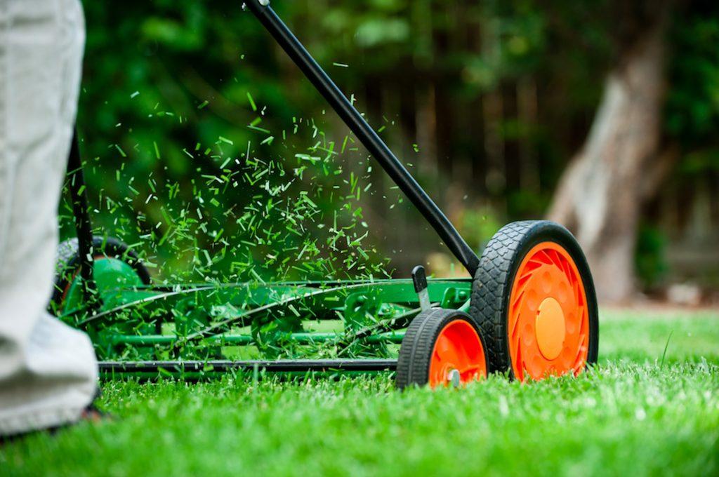sustainable garden tips