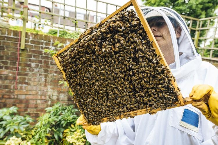 Antibiotic Honeybees 1
