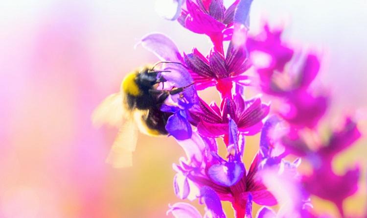 Antibiotic Honeybees 3